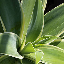 Agave In Color by Eileen Brabender