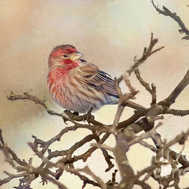 House Finch Heavenly by Sharon McConnell