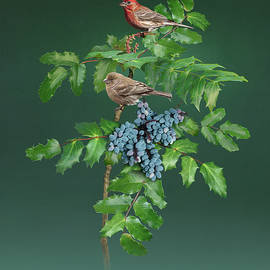 House Finches and Grapeholly by Spadecaller