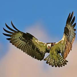 Hovering by Stuart Harrison
