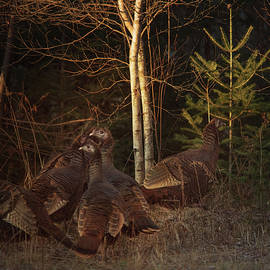 Huddled Up On The Woodline by Sue Capuano