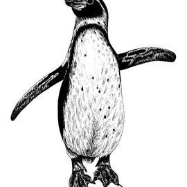 Humboldt penguin on rock by Loren Dowding