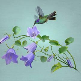 Hummingbird and Blue Bellflower by Spadecaller