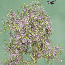 Hummingbird At The Flowering Tree  by David Dehner
