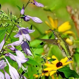 Hummingbird Bounty by Carmen Macuga