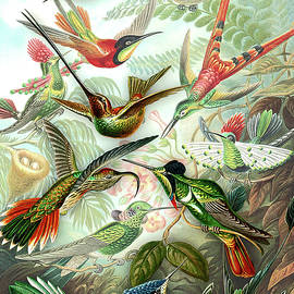 Hummingbird Gathering by Susan Maxwell Schmidt