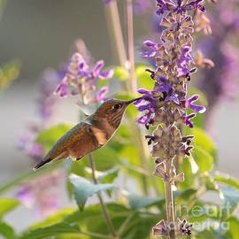 Hummingbird Glow Square by Carol Groenen