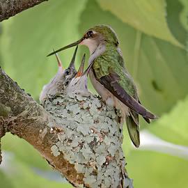 Hummingbird by Jim Gregio
