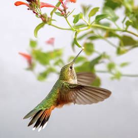 Dancing to Wild Nectar by Judi Dressler