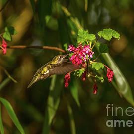 Hummingbird on Last Day of Winter by Marv Vandehey