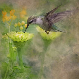 Hummingbird by Ron Grafe