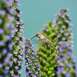 Hummingbirds by Kathy Beyer