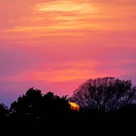 Hurry Sundown  by Terry Walsh
