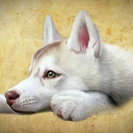 Husky Puppy - DWP1830938 by Dean Wittle