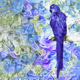 Hyacinth Macaw by Susan Maxwell Schmidt