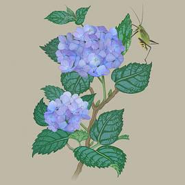 Hydrangea and Grasshopper by Spadecaller
