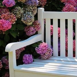 Hydrangea Bench by Cynthia Guinn