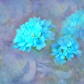 Hydrangea Design by Aimee L Maher ALM GALLERY