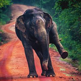 I got the moves like jagger by Bhagya Senevirathna