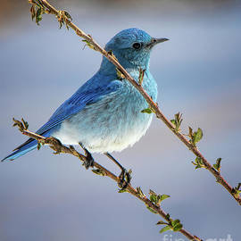 I Heard the Bluebirds Sing by Jim Garrison