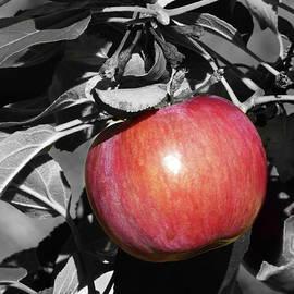 I Love Apples by Lyuba Filatova