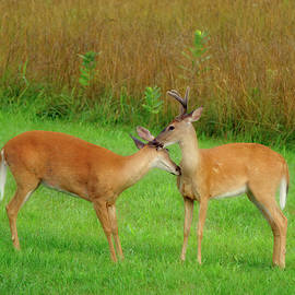 I Love You Deerly by Daniel Beard