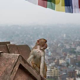 I present to you kathmandu by Sergio Florez Alonso