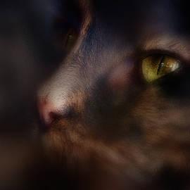 I See You 2 by Margarita Buslaeva