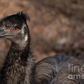 I See You Emu by Linda Howes