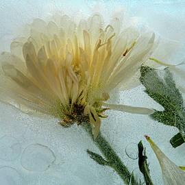 Ice Flower Number 1 by Mary Lee Dereske