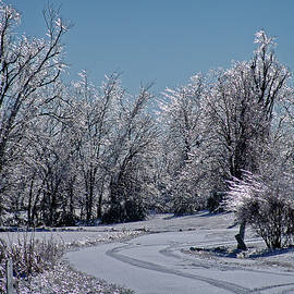 Icy Lane by Shelly Gunderson