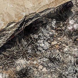 Idaho Underbrush - Monochromatic by Anthony Ellis
