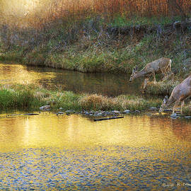 Imagine You're A Deer... by R christopher Vest