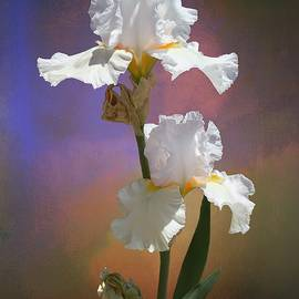 Immortality Iris by Christina Ford