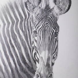 Imperial Zebra by Barbara Keith