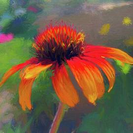 Impressionist Orange Echinacea  by Mo Barton