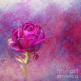 Impressionist Rose by Eva Lechner