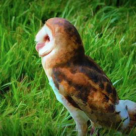 Impressions of a Barn Owl by Kathi Isserman