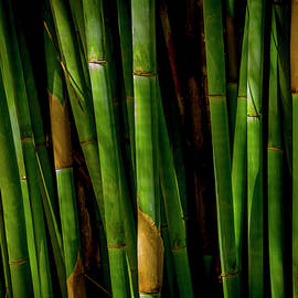 In a Bamboo Forest - 1 by W Chris Fooshee