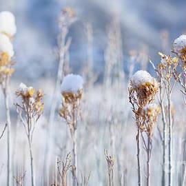 A Snowy Row by Susan Warren