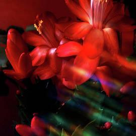 In Night Lights  by Jasna Dragun