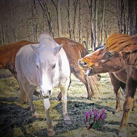 In The Field With The Wild Crocus Is The Alpha Mare by Patricia Keller