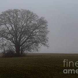 In the Fog by Norma Brandsberg
