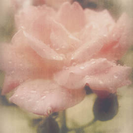 While The Dew Is Still On The Roses by Lucinda Walter