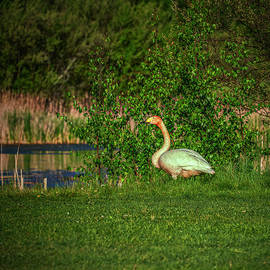In the green #j9 by Leif Sohlman