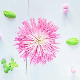 In the Pink by Nina Stavlund