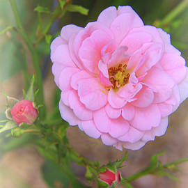 In The Pink by Susan Buscho