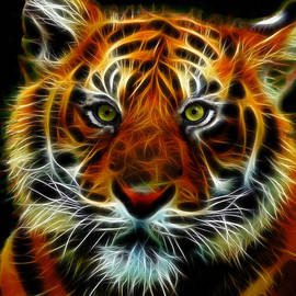 Indian Tiger by Michael Durst