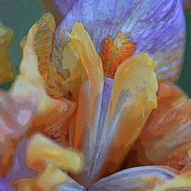 Inside An Iris by Robert Tubesing
