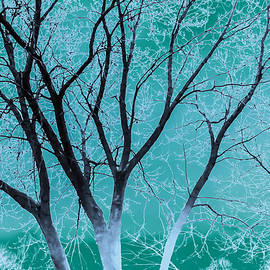 Inside The Winter Mint Air   by Carrie Armstrong